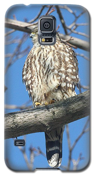 Perched Merlin Galaxy S5 Case
