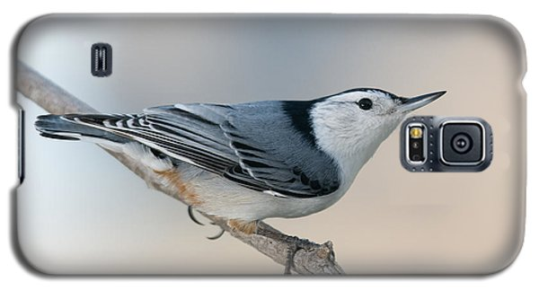 Perching Nuthatch Galaxy S5 Case