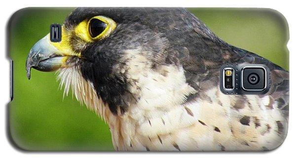 Galaxy S5 Case featuring the photograph Peregrine Falcon by Cynthia Guinn