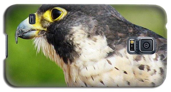 Peregrine Falcon Galaxy S5 Case by Cynthia Guinn