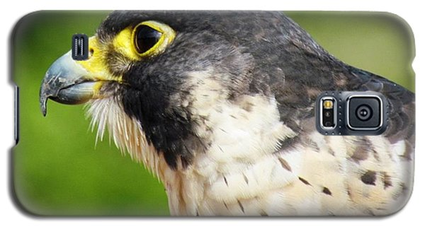 Peregrine Falcon Galaxy S5 Case