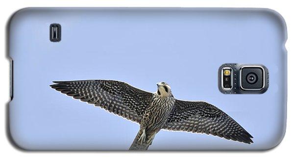 Peregrine Falcon In Flight Galaxy S5 Case