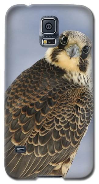 Peregrine Falcon Looking At You Galaxy S5 Case