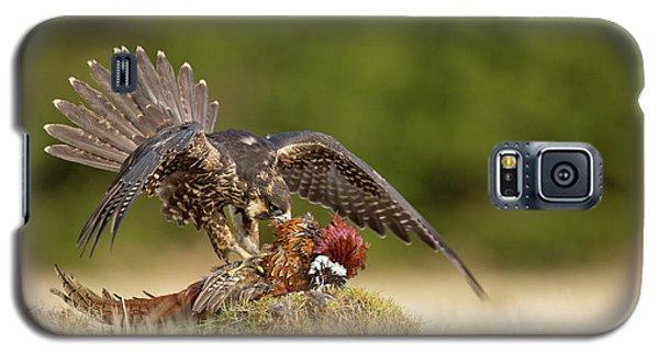 Pheasant Galaxy S5 Case - Peregrine Falcon by Milan Zygmunt