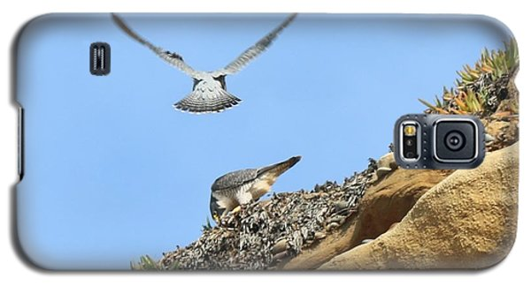 Peregrine Falcons - 2 Galaxy S5 Case