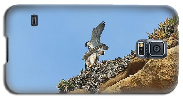 Peregrine Falcons - 3 Galaxy S5 Case