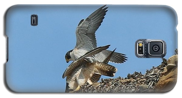 Peregrine Falcons - 4 Galaxy S5 Case