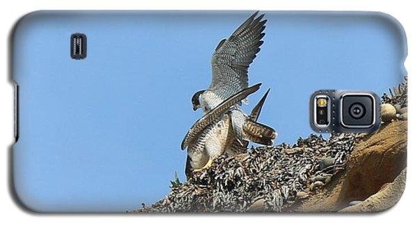 Peregrine Falcons - 5 Galaxy S5 Case