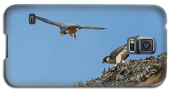Peregrine Falcons - 6  Galaxy S5 Case