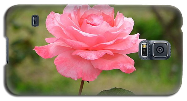 Galaxy S5 Case featuring the photograph Perfect In Pink by Lew Davis
