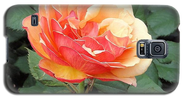 Galaxy S5 Case featuring the photograph Perfect Rose by Janette Boyd