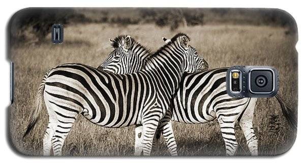 Perfect Zebras Galaxy S5 Case by Delphimages Photo Creations