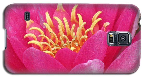 Perry's Fire Opal Water Lily Galaxy S5 Case by Darleen Stry