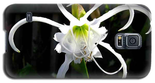 Peruvian Daffodil Named Advance Galaxy S5 Case