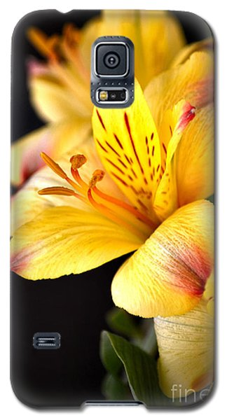 Peruvian Lily Galaxy S5 Case