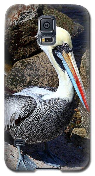 Peruvian Pelican Galaxy S5 Case