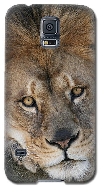 Pet Me Galaxy S5 Case by Judy Whitton