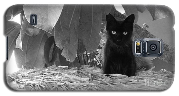 Pet Portrait - Boo Galaxy S5 Case by Laura  Wong-Rose