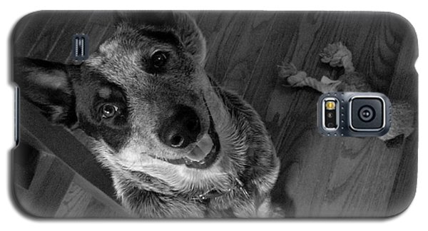 Pet Portrait - Forrest Galaxy S5 Case