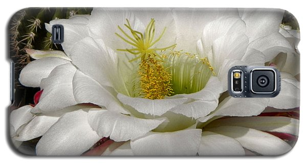 Galaxy S5 Case featuring the photograph Petals And Thorns by Deb Halloran