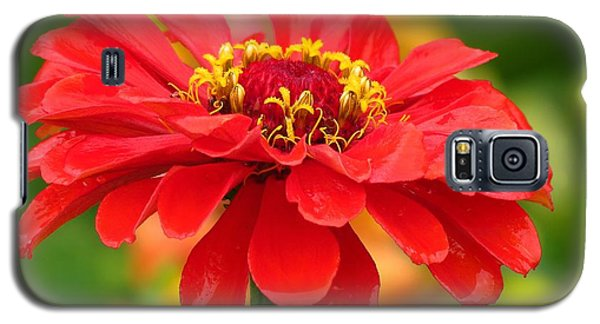 Petals In The Rain Galaxy S5 Case