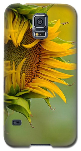 Galaxy S5 Case featuring the photograph Petals by Ronda Kimbrow