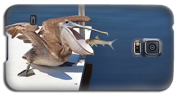 Galaxy S5 Case featuring the photograph Pete The Pelican And The Doomed Fish by Pamela Blizzard