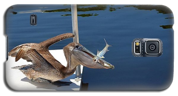 Galaxy S5 Case featuring the photograph Pete The Pelican And The Poor Fish by Pamela Blizzard