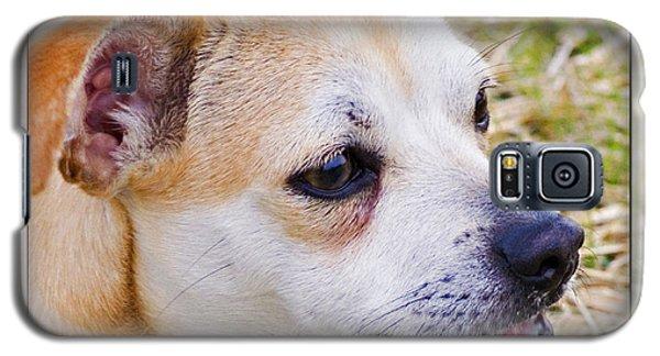 Pets Galaxy S5 Case