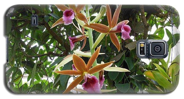 Phaius Orchids Galaxy S5 Case