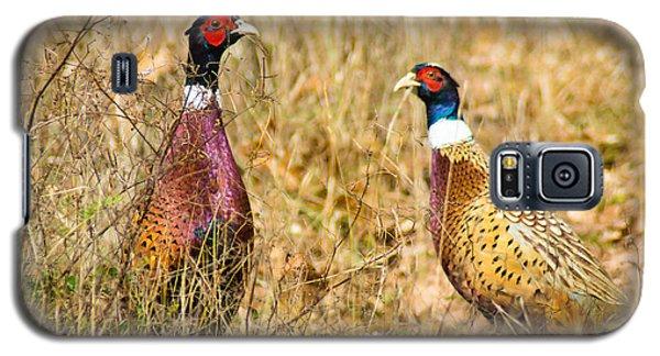Pheasant Friends Galaxy S5 Case