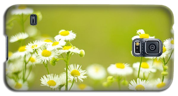 Philadelphia Fleabane Wildflowers In Soft Focus Galaxy S5 Case