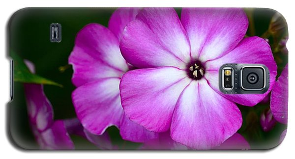 Phlox Galaxy S5 Case