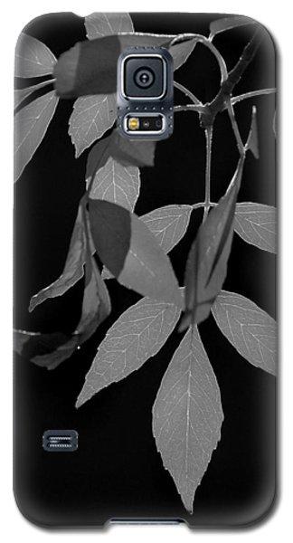 Phoenix Fall 05 Galaxy S5 Case