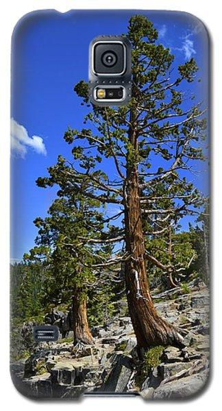 Trees Near Emerald Bay Lake Tahoe Galaxy S5 Case by Alex King