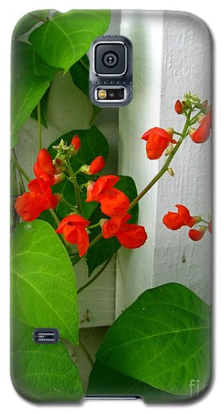 Galaxy S5 Case featuring the photograph Picket Fence Runner Beans by Margaret Newcomb