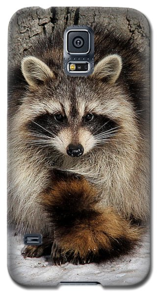 Picture Perfect Galaxy S5 Case by Doris Potter