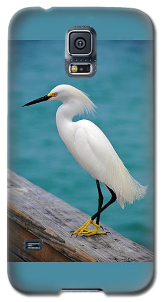 Pier Bird Galaxy S5 Case