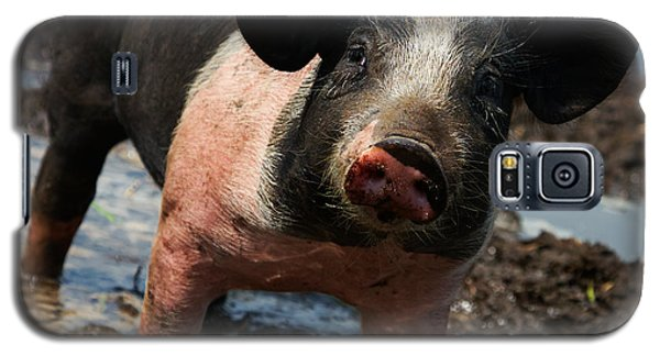 Galaxy S5 Case featuring the photograph Pig In The Mud by Nick  Biemans