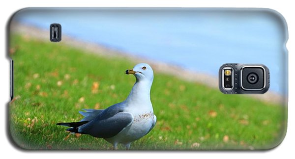 Galaxy S5 Case featuring the photograph Seagull At The Park by Lynn Hopwood