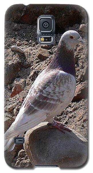 Pigeon Galaxy S5 Case