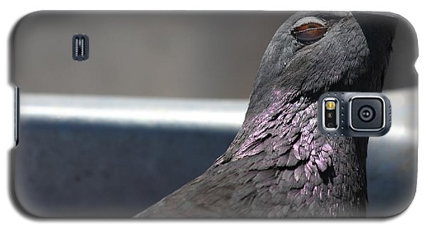 Pigeon In Ecstasy  Galaxy S5 Case