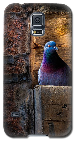 Pigeon Of The City Galaxy S5 Case
