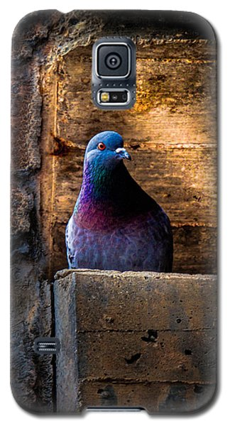 Pigeon Of The City Galaxy S5 Case by Bob Orsillo