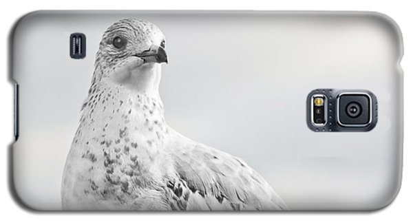 Galaxy S5 Case featuring the photograph Pigeon Pride II by Nicola Nobile