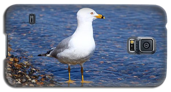 Galaxy S5 Case featuring the photograph Seagull Wading  by Lynn Hopwood