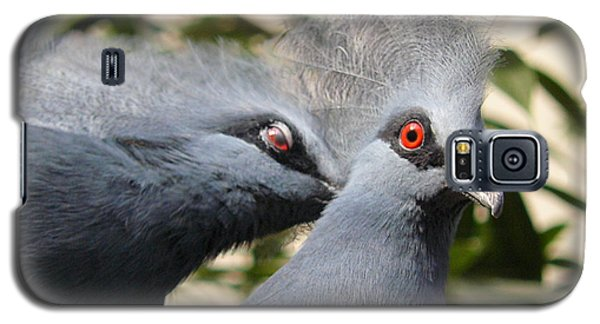 Pigeons Galaxy S5 Case by Jane Ford