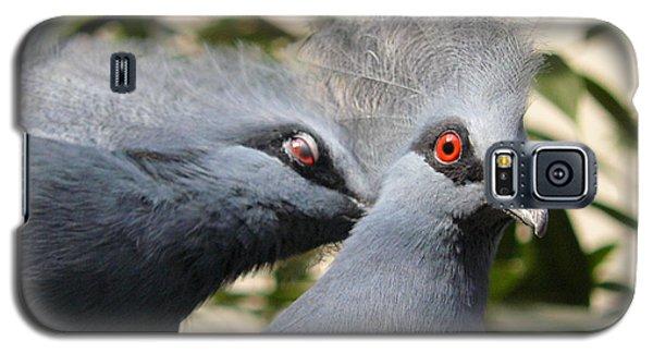 Pigeons Galaxy S5 Case