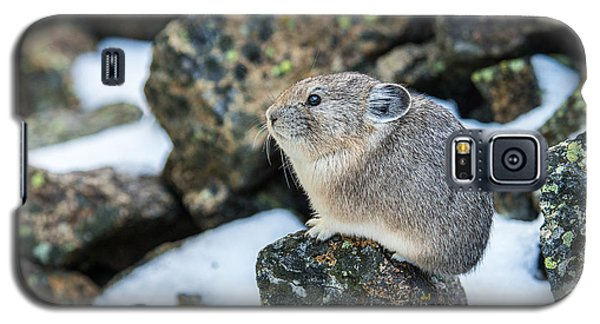 Pika In The Park Galaxy S5 Case by Yeates Photography