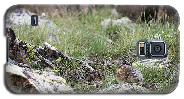 Pika  Galaxy S5 Case
